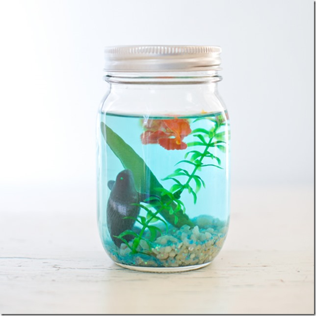 mason-jar-aquarium-hello-wonderful