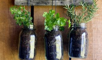 Hanging Herb Garden with Mason Jars