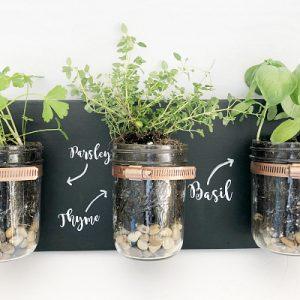 Mason Jar Wall Herb Garden Planter - Mason Jar Planter - Mason Jar Plants