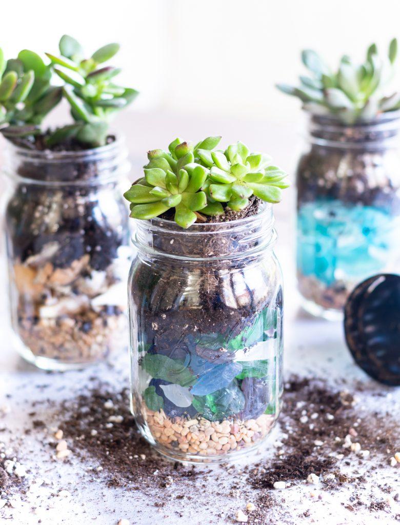 Summer Succulent Mason Jar Planters - Mason Jar Planters - Succulents in Mason Jars